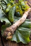 Fresh horseradish Stock Photo