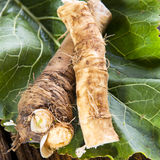 Fresh horseradish Royalty Free Stock Image