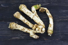 Fresh horseradish roots on wooden background Royalty Free Stock Photos