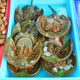 Fresh horseshoe crab. At fish market in Thailand Royalty Free Stock Photo