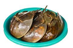 Fresh horseshoe crab stock image