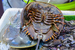 Fresh horseshoe crab on a market stall in Thailand.  stock photography