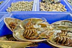 Fresh horseshoe crab in market of Thailand Stock Photos