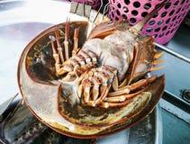 Fresh horseshoe crab Stock Photography