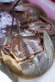 Fresh horseshoe crab from seafood store royalty free stock images