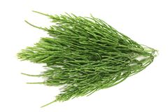 Fresh horsetail Stock Images