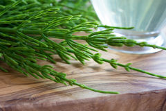 Fresh horsetail with a cup of horsetail tea Royalty Free Stock Images