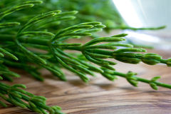 Fresh horsetail twigs on a wooden background Royalty Free Stock Images