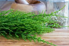 Fresh horsetail twigs on a wooden background Stock Photography