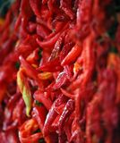 Fresh Hot Peppers. Picture of Stock Photo