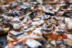 Fresh, hot pizza with mushrooms Royalty Free Stock Photography