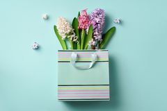 Fresh hyacinth flowers in shopping bag on blue punchy pastel background. Banner with copy space. Spring, summer, Woman day concept. Creative layout. Top view royalty free stock photography