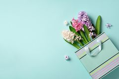Fresh hyacinth flowers in shopping bag on blue punchy pastel background. Banner with copy space. Spring, summer, Woman day concept. Creative layout. Top view royalty free stock photos