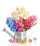 Fresh hyacinth and narcissus with easter eggs Royalty Free Stock Photo