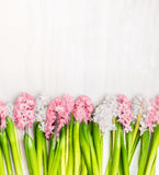 Fresh hyacinths flowers border on white wooden background, top view. Springtime Stock Photos