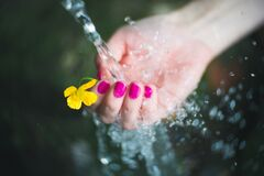 Free Fresh Impressions Stock Photography - 183146142