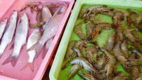 Fresh Indian Fish this stock photo taken in Puri sea food royalty free stock photography