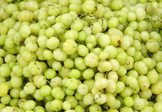 Fresh Indian Gooseberries Royalty Free Stock Photography