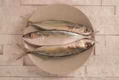 Fresh indian mackerel fish in a plate on white marble background. Royalty Free Stock Photo