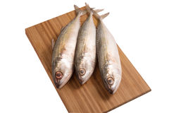 Fresh indian mackerel fish on wooden panel. Stock Image