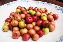 Fresh Indian Plum (Flacourtia sp.) Royalty Free Stock Images
