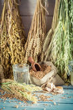 Fresh ingredients for bread and buns with whole grains Royalty Free Stock Photography