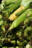 Fresh Iowa Sweet Corn. At the Farmers Market Royalty Free Stock Images