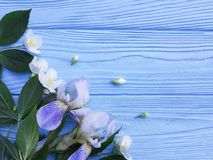 Fresh iris blossom flower on a blue wooden background. Fresh iris flower blossom a blue wooden background royalty free stock photo