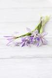 Fresh irises on a white background Royalty Free Stock Photo
