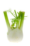 Fresh isolated fennel Royalty Free Stock Image
