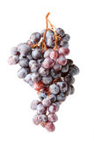 Fresh isolated grape berry Stock Photo