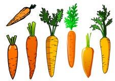 Fresh isolated orange carrot vegetables Royalty Free Stock Photos
