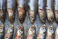 Fresh Italian anchovies. On plate Royalty Free Stock Photo