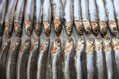 Fresh Italian anchovies. On plate Royalty Free Stock Photography