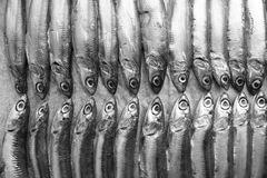 Fresh Italian anchovies. On plate Stock Photography