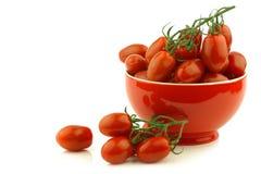 Fresh italian cherry tomatoes on the vine Royalty Free Stock Photo