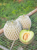 Fresh Japanese musk melons Royalty Free Stock Images