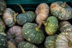 Fresh Japanese pumpkins. A close-up group of fresh green japanese pumpkins at the supermarket in Thailand