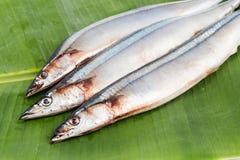 Fresh Japanese Sanma fish on leaf.  Royalty Free Stock Image