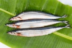 Fresh Japanese Sanma fish on leaf.  Stock Photography