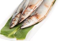 Fresh Japanese Sanma fish on leaf.  Royalty Free Stock Photo