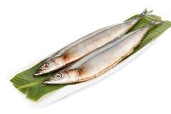 Fresh Japanese Sanma fish on leaf.  Royalty Free Stock Photography