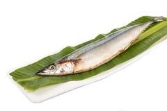 Fresh Japanese Sanma fish on leaf.  Stock Photo