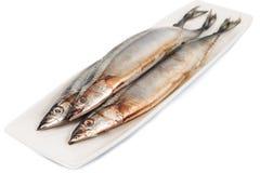 Fresh Japanese Sanma fish on plate.  Royalty Free Stock Photography