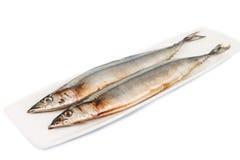 Fresh Japanese Sanma fish on plate.  Stock Photos