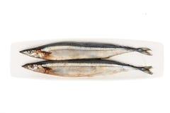 Fresh Japanese Sanma fish on plate.  Royalty Free Stock Images