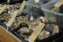 Fresh Japanese seashell Stock Photography