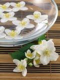 Fresh jasmine. Series flowers: branch of fresh jasmine Royalty Free Stock Photography