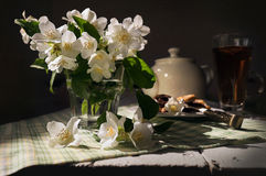 Fresh jasmine flowers in glass on sunny rays Royalty Free Stock Image