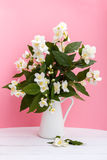 Fresh jasmine flowers in a vase Stock Photography